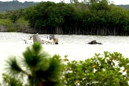 Bahamas plane crash kills all 8 on board